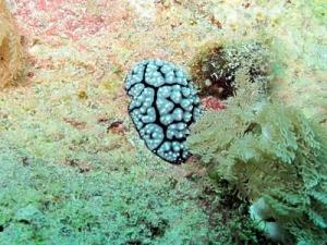 Aneka karang pulau harapan